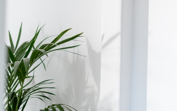 Plant_Villa_1